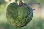 Cherimoya-Frucht