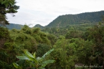 Blick auf den Bergregenwald von Mindo