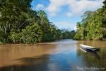 Mitten im Amazonasbecken - Yasuni National Park
