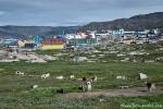 Hundeparkplatz - Ilulissat
