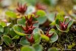 Merkwürdige Blüten