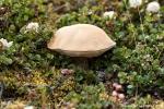 Überall wachsen Pilze