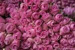 Blumen gibt es haufenweise