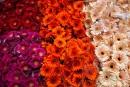 Blüten in allen Farbschattierungen gibt es hier