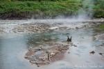 Die geothermischen Aktivitäten dieses Gebietes sind nicht zu übersehen