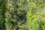 Der Urwald scheint undurchdringlich zu sein