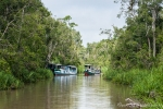 Auf dem Sekonyer-River in den Regenwald