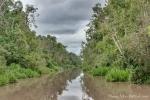 Der Fluss zieht sich mitten durch den Regenwald von Borneo