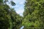 Je weiter wir in den Regenwald vordringen, umso enger wird der Fluss