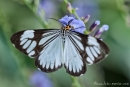 Hübscher Schmetterling