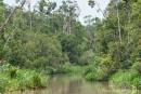 Dichte Dschungelvegetation säumt die Ufer