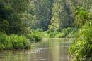 Oft haben wir das Gefühl, dass jetzt der Fluss zu Ende ist, so dichtes Grün umgibt uns