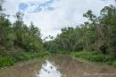 Ein üppig grüner Regenwald ist die Heimat der Orang Utans