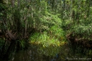 Üppige Vegetation, so weit das Auge reicht