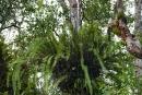 Die Vegetation wächst in mehreren Stockwerken