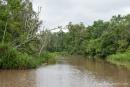 Wir erleben eine spannende Fahrt durch den Regenwald von Borneo