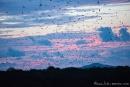 Schon steigen aus den Mangrovenwäldern die Flughunde zum nächtlichen Beuteflug auf
