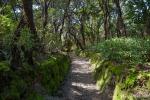 Das feuchte Klima am Vulkan sorgt für eine üppige Vegetation