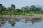Seerosenteich bei Cangkung