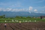 Gemüseanbau am Vulkan Papandayan