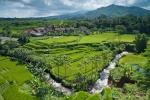 Malerische Landschaft mit Reisterrassen