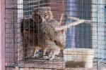 Arme kleine Eulen - Tier- und Vogelmarkt Yogyakarta