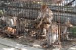 Man kann das Leid dieser Tiere deutlich sehen - Tier- und Vogelmarkt Yogyakarta