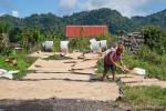Jeder freie Fleck wird für die Trocknung der geernteten Reiskörner genutzt