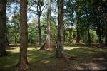 Im botanischen Garten sind alle Bäume beschriftet