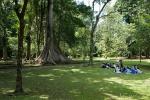 Picknick im botanischen Garten