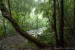 Der Regenwald im Gunung Gede Pangrango Nationalpark macht seinem Namen alle Ehre