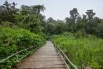 Wanderweg im Gunung Gede Pangrango NP