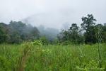 Mystische Stimmung im Gunung Gede Pangrango NP