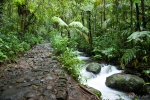 Dichter Regenwald im Gunung Gede Pangrango NP