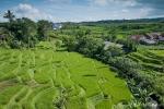 Reisterrassen auf dem Weg nach Wonnosobo