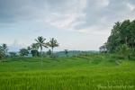 Ausblick vom Ijen-Resort, das mitten in Reisterrassen steht