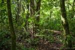 Regenwald im Gunung Gede Pangrango Nationalpark