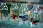 So kann man Infusionsflaschen auch verwenden - Tier- und Vogelmarkt Yogyakarta