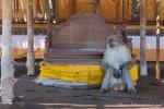 Pulaki Tempel - Hier haben die Affen das Sagen