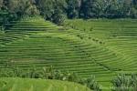 Es ist erstaunlich, wie symetrisch die Reisterrassen angelegt werden