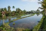 Dieses Reisfeld kann für die nächste Ernte bepflanzt werden.