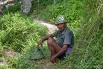 Reisbauer in Tabanan