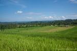 Obwohl überall Reis angebaut wird, kann sich das Land nicht allein versorgen und muss Reis noch importieren.