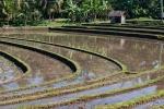 In den Reisterrassen werden auch noch Fische gezüchtet