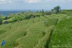 Die Reisterrassen von Jatiluwih stehen sogar unter dem Schutz der Unesco