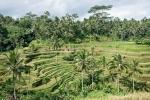 Kunstvolle Reisterrassen in Tabanan