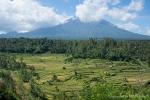Reisterrassen an der Südküste von Bali