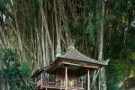 Zum Läuten der Glocken muss der Prister oben in den Feigenbaum klettern und der Priester ist bereits 80 Jahre alt - Hoftempel Pura Kehen