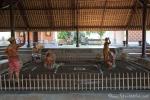 Hahnenkampfarena im Reichstempel Pura Taman Ayun. Beim Hahnenkampf dürfen Frauen nicht zuschauen.