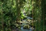 Idyllische Schlucht des Pakrisan-Flusses - Gunung Kawi